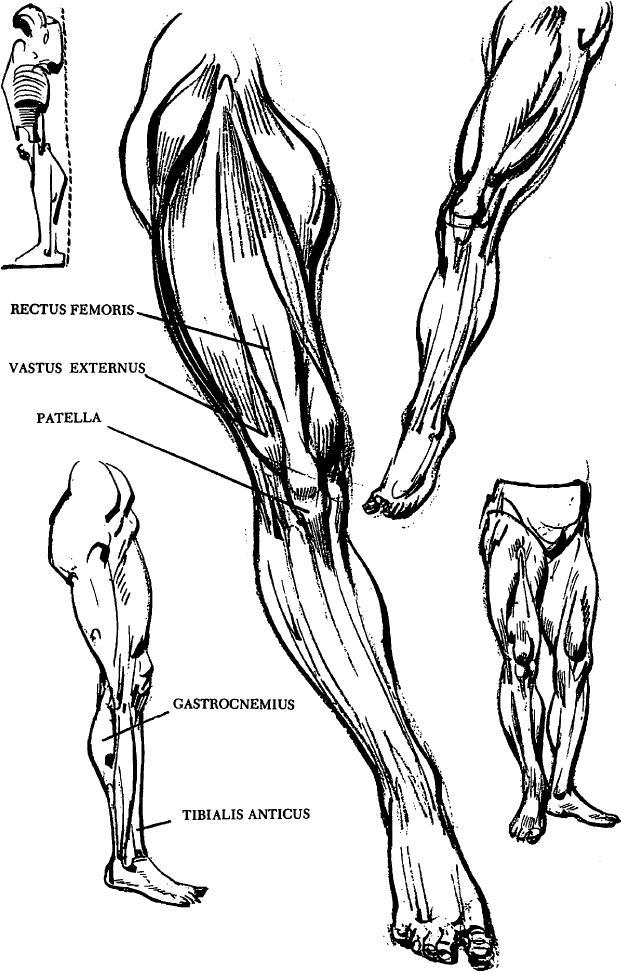 Human Legs Drawing : human, drawing, Human, Drawing, Article, Tutorials