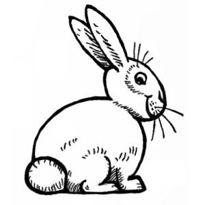 bunny draw rabbits bunnies easy drawing step lesson rabbit tail steps square