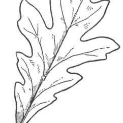 Parts Of A Flower Simple Diagram Schedule Network Project Management How To Draw Oak Leaves With Step By Drawing Lessons - ...