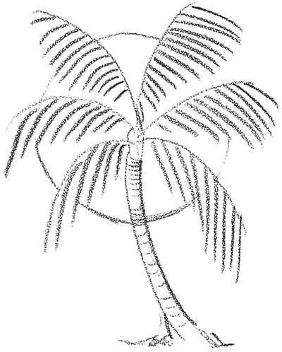 Palm Tree Beach Drawing Palm Tree Sunset Drawings