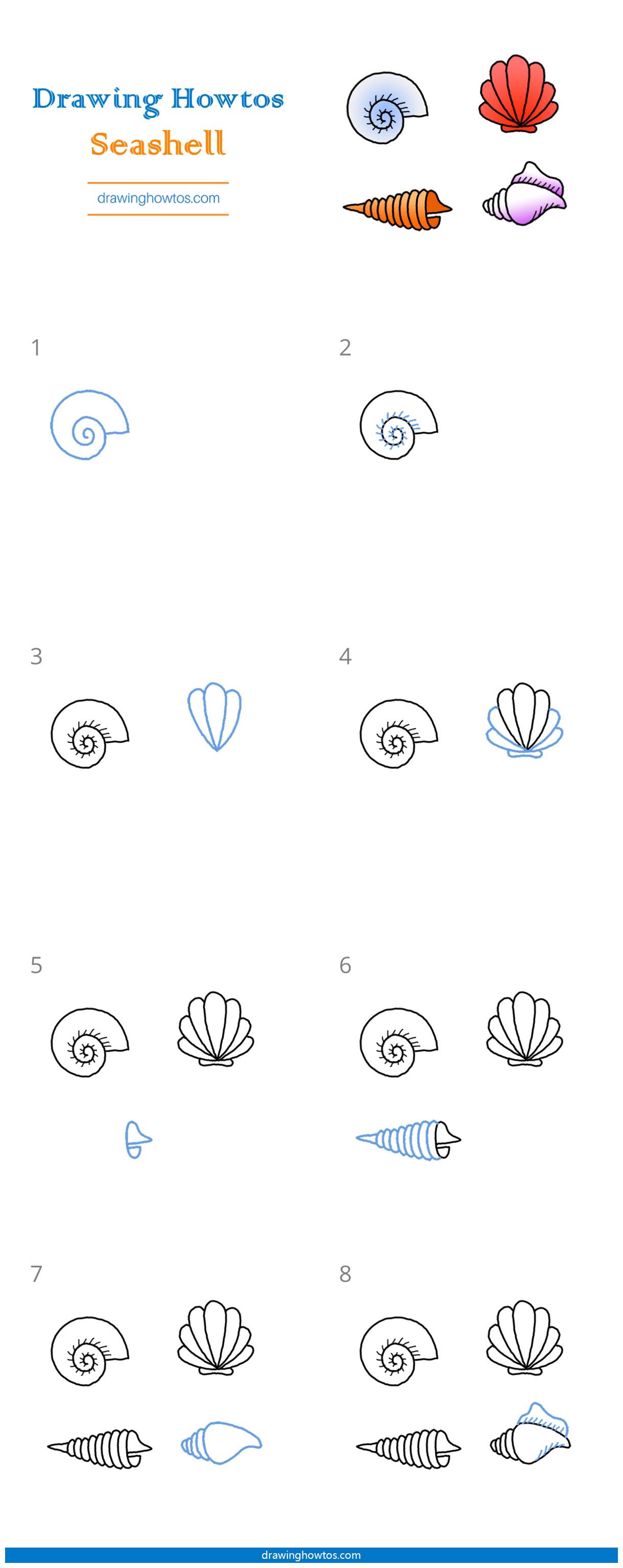 How To Draw A Seashell : seashell, Seashell, Drawing, Guides, Howtos