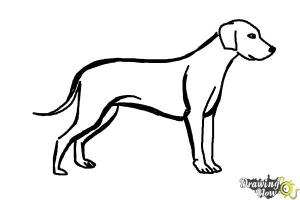 dog draw simple coloring drawingnow steps step