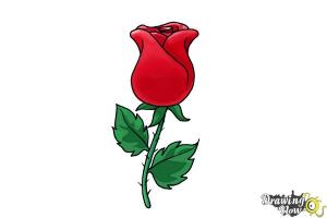 rose easy draw drawing step realistic roses flowers getdrawings steps drawingnow loved ones present give