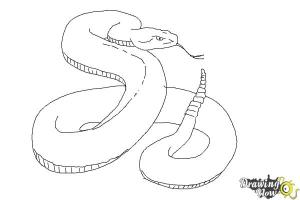 snake draw realistic step steps coloring drawingnow