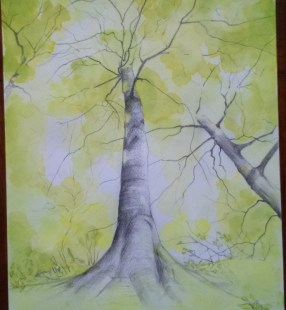 Tree with graphite and watercolour - sketchbook
