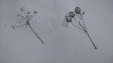 Sketchbook - graphite - seeds