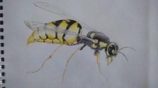 Wasp - wax pencils