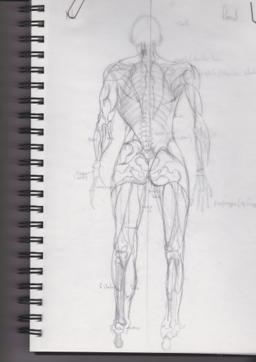 Anatomy4