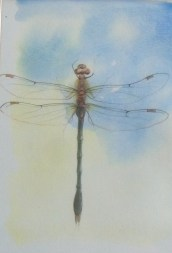 Dragonfly- watercolour/pencil