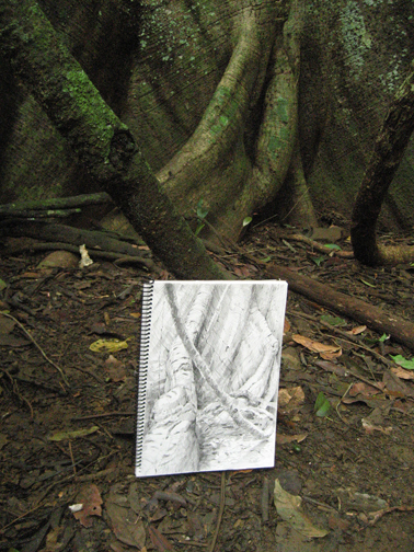 Drawing the Ceiba Tree