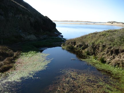 Abbott's Lagoon, Point Reyes, California