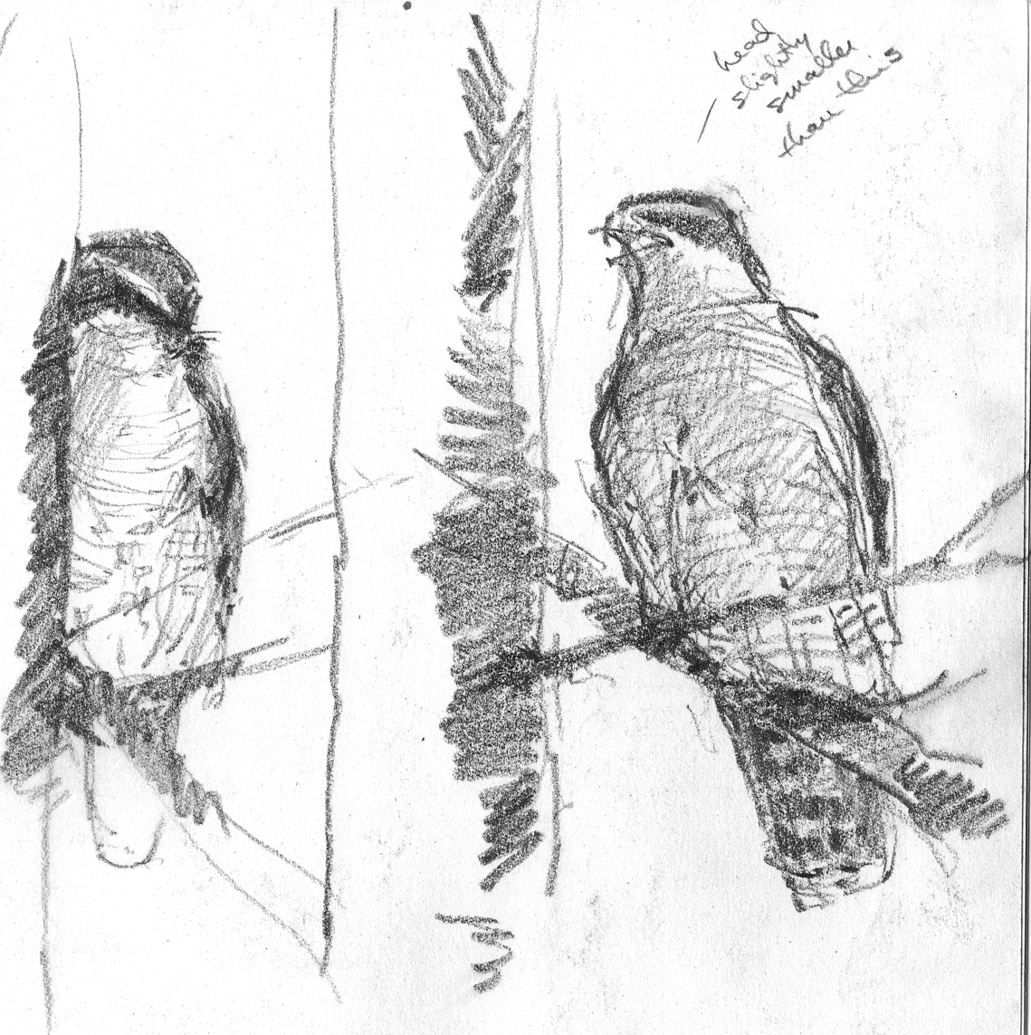 New England Sketchbook 2: Critters