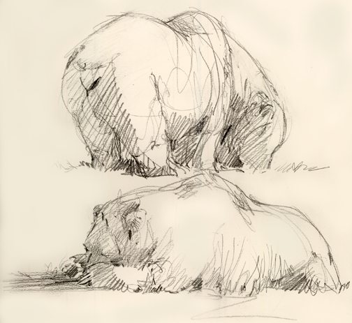 "Drawn from life at Oklahoma City Zoo's new ""Oklahoma Trails"" feature."