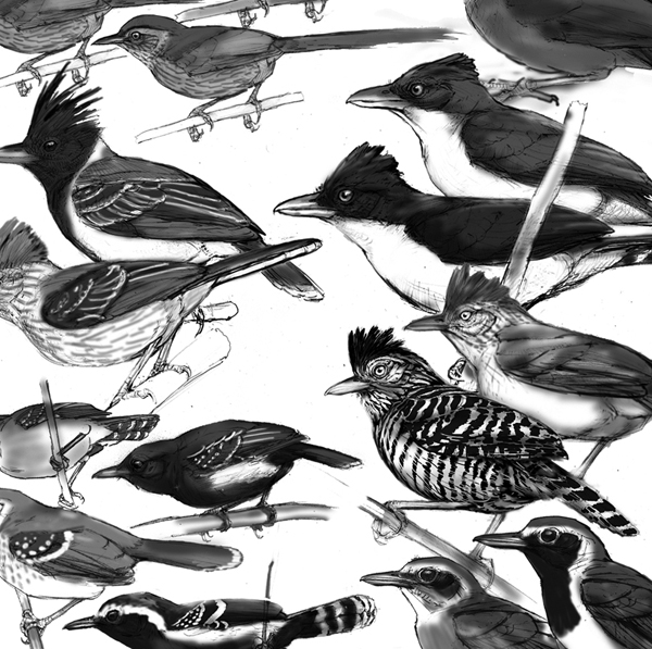 A piece of the puzzle- putting together a bird plate is like playing with jigsaw pieces