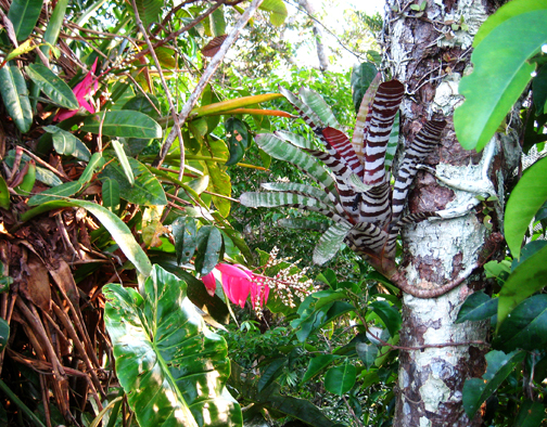 the complexity of tropical canopy life. Amazon rainforest, Peru.