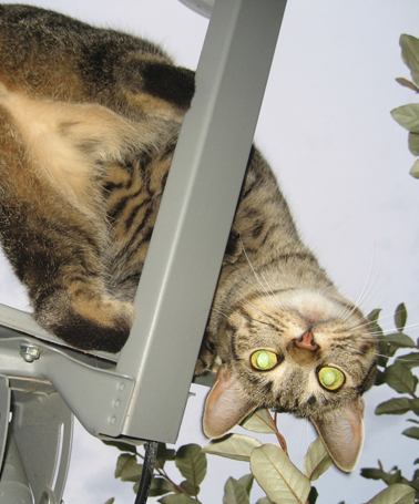 """Gizmo adjusts the satellite dish for better """"All My Children"""" reception."""
