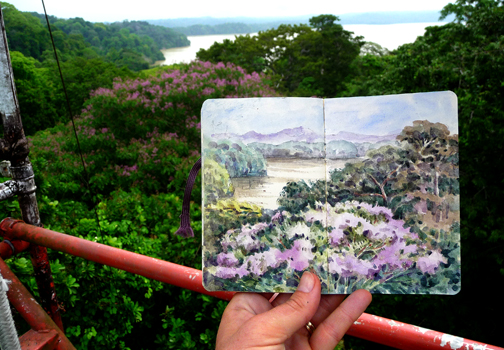 The view at the top of the tower on BCI, with watercolor. The purple blooming tree in the foreground (and the painting) is Dipteryx panamensis.