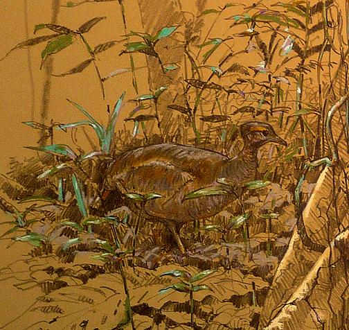 Closeup detail of great tinamou.