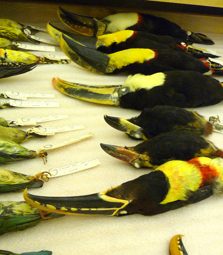 """A drawerful of toucans; I felt like Daisy in the Great Gatesby: """""""