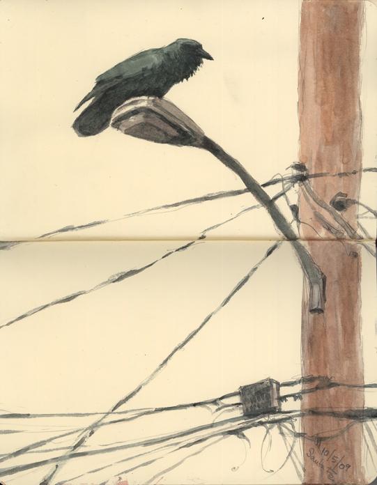 Birdwatching in Santa Fe.