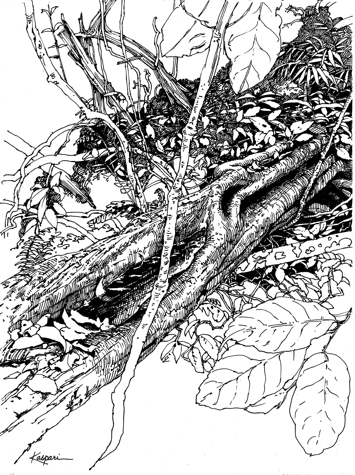 Plein Air Pen And Ink Drawings Drawing The Motmot