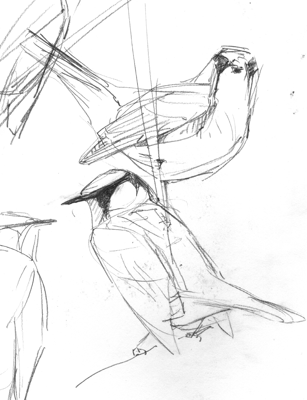 Birds and Boulders: new drawings