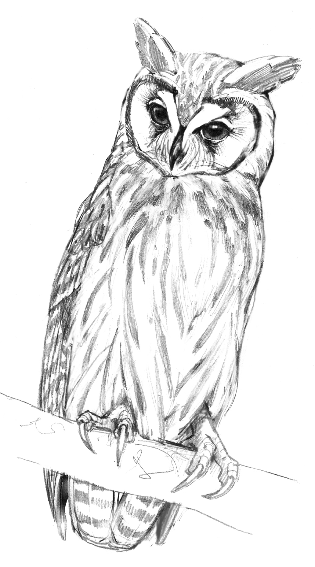 Moonchild: Striped Owls / Source Material