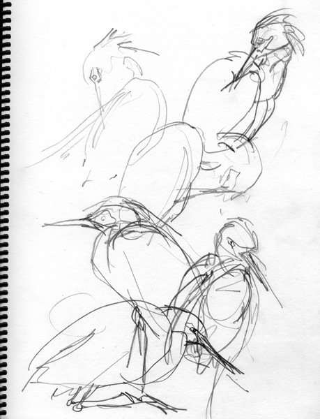 5 Steps to Better Bird Drawing