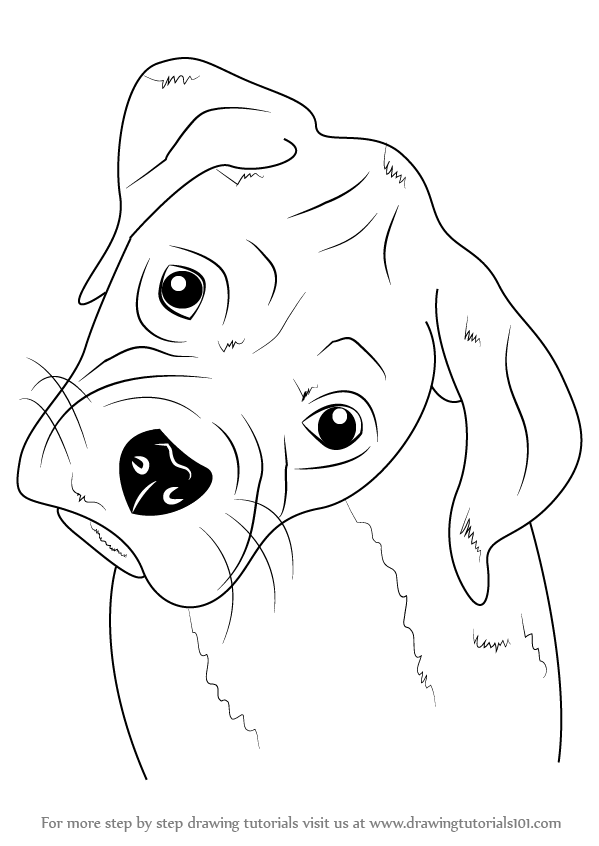 How To Draw A Puppy Face : puppy, Learn, Boxer, Puppy, (Farm, Animals), Drawing, Tutorials
