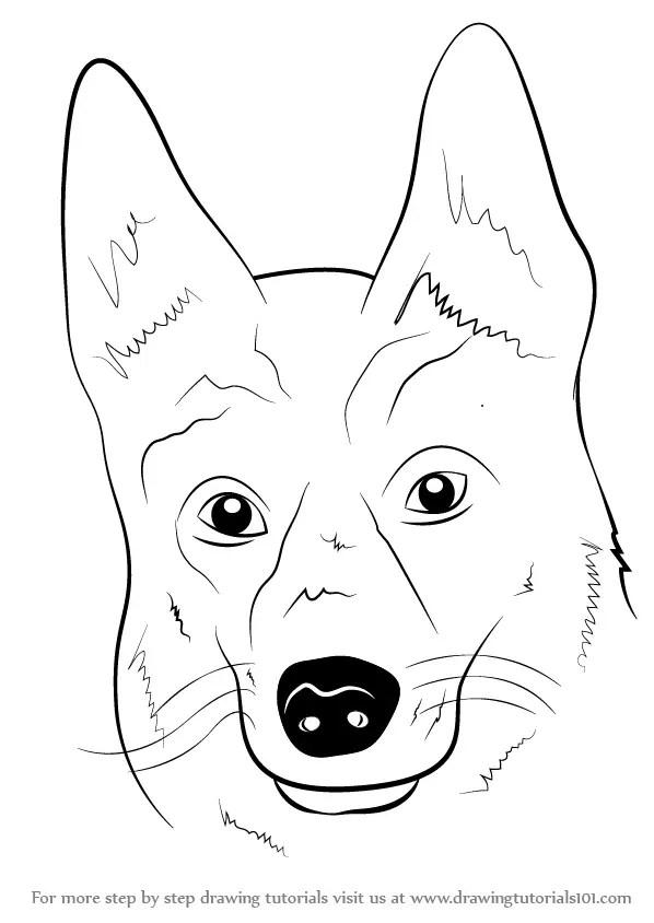 Dog Face Drawing : drawing, Learn, German, Shepherd, (Farm, Animals), Drawing, Tutorials