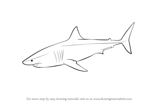 shark draw easy drawing step drawings sketch sharks simple fish learn tattoo animals sea fishes tutorials sketches cool coloring pages