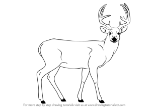 deer buck draw drawing step animals outline wild drawings animal line mule pencil sketches head drawingtutorials101 easy male learn getdrawings