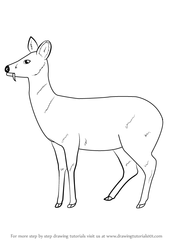 Deer Drinking Water Drawing : drinking, water, drawing, Learn, Chinese, Water, (Wild, Animals), Drawing, Tutorials