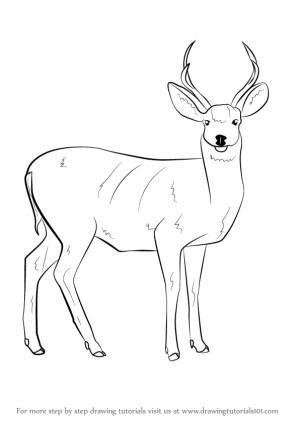 deer mule draw animals outline step drawing wild sketches easy tutorial tutorials learn getdrawings paintingvalley