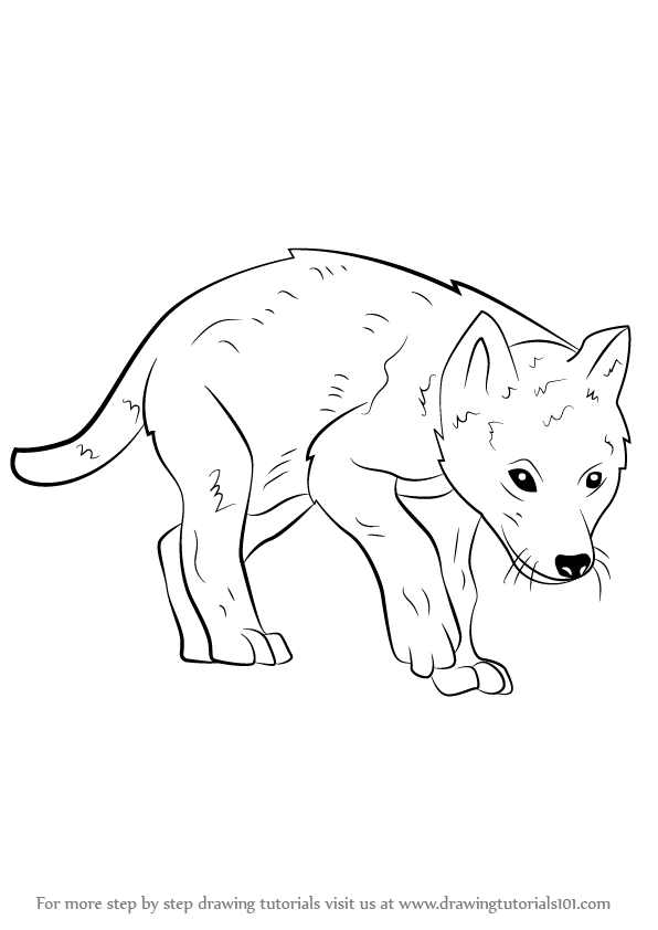 Wolf Pup Drawing : drawing, Learn, (Wild, Animals), Drawing, Tutorials