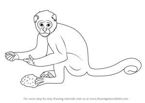 monkey draw step drawing zoo animals learn tutorials drawingtutorials101