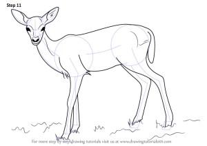 deer drawing draw fawn step drawings line animals sketch buffalo simple painting beginners aka tutorials drawingtutorials101 easy doe learn mule