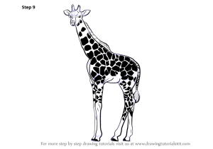 draw giraffe drawing step spots zoo animals learn required complete making