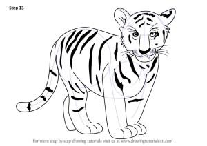 tiger draw drawing cub step zoo animals line drawings drawingtutorials101 getdrawings tutorial necessary improvements finish tutorials