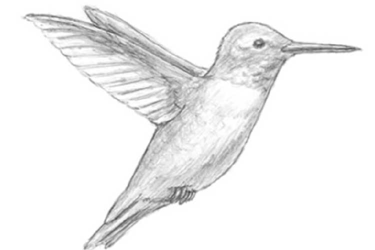 How to draw a hummingbird: Bright Images, Easy Painting