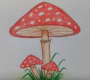 mushroom drawing trippy easy mushrooms cartoon realistic triangle step