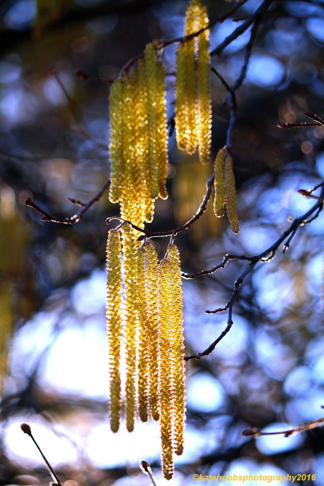 Catkins copyrighted