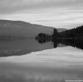 Reflection B&W copyrighted