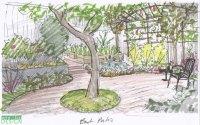 Garden Drawing Details | DrawnToGarden