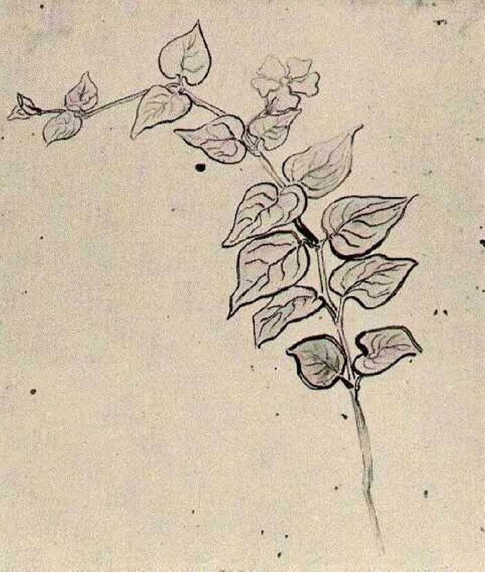 Vincent van Gogh, Branch With Leaves, 1890