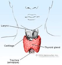 Human thyroid diagram