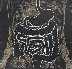 Chalkboard Digestive System Drawing