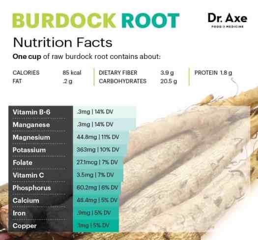 Burdock root nutrition - Dr. Axe