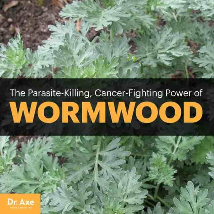 Wormwood - Dr. Axe