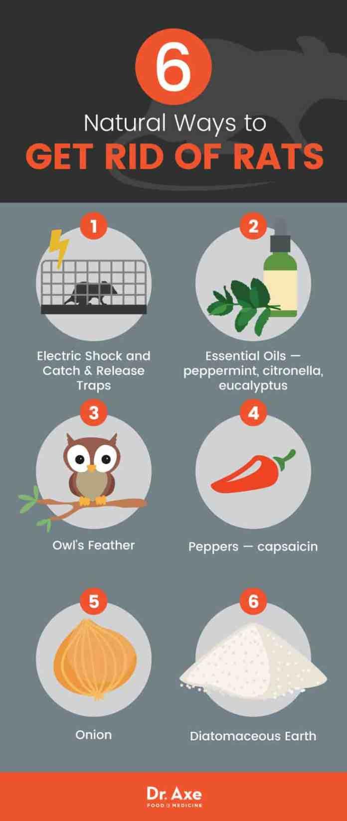Natural Remedies To Rid Rats